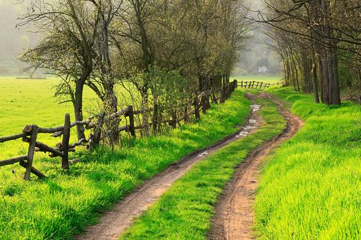 Farm Road in Spring