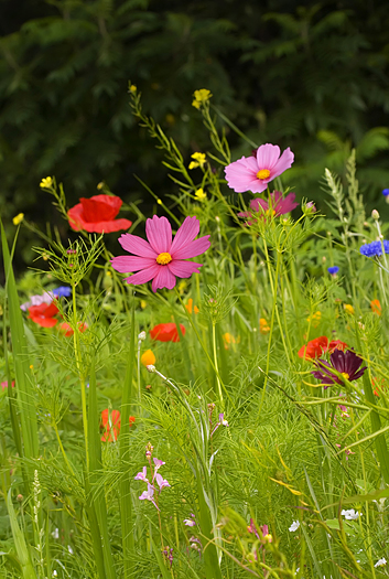 Brilliant wildflowers in a green field