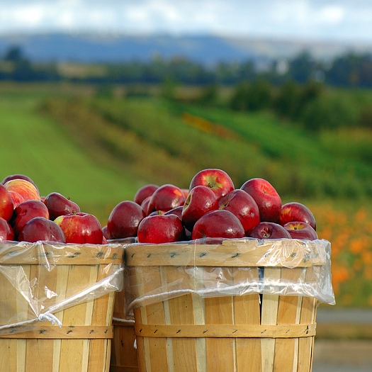 Two bushel baskets of red apples