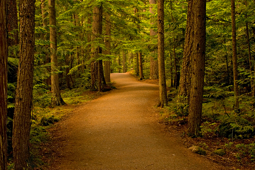 Path in the Forest - Woods
