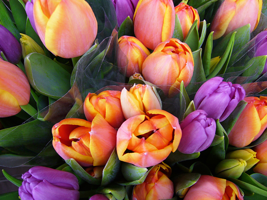 tulip bouquets for sale in front of a flower shop, Stockholm / Sweden