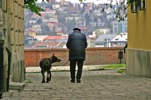Elderly man with dog on cobbled street