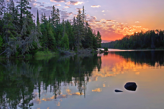 Coniferous pines in the wilderness, on a lake, at sunrise.