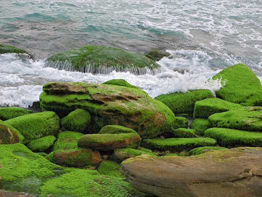 Mossy green rocks