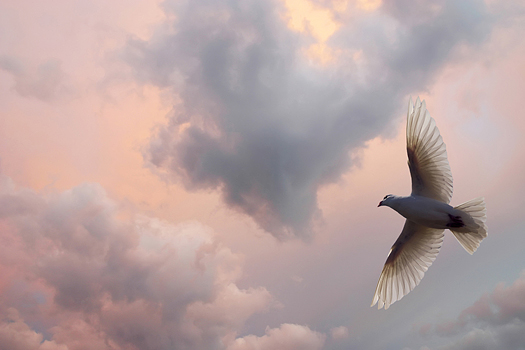 Dove Soaring in a beautiful cloud filled sky