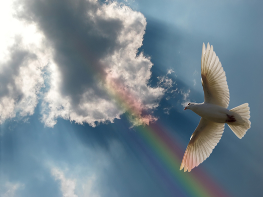Dove Soaring in a beautiful sky with a rainbow and sunbeams.