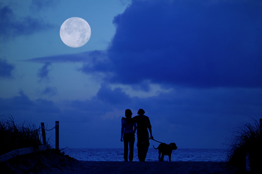 Loving couple walking their dog on the beach in the moonlight.