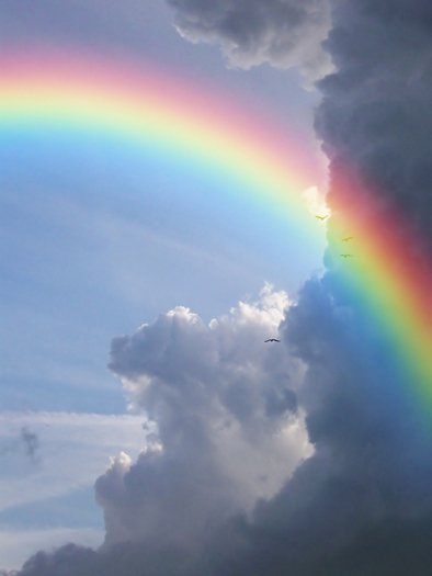 Rainbow in front of a flock of birds in flight against a background of clouds