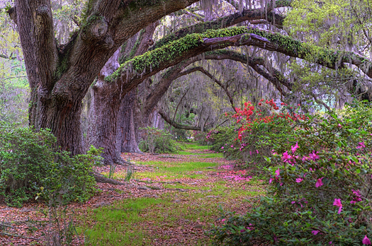 Spring landscape scene in woods of Charleston, South Carolina
