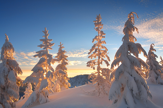 Snowy Trees at Sunrise