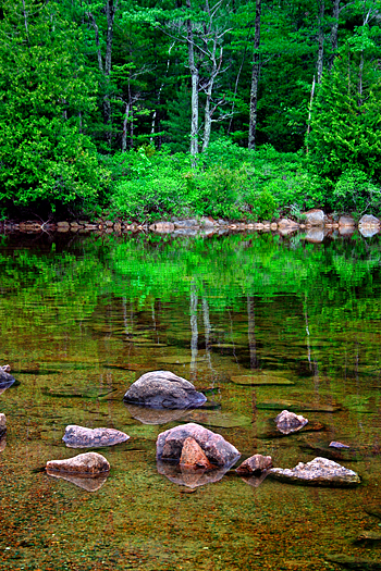 Reflecting pool with rocks and Summer greenery