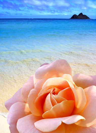 Romantic Beach - Lanikei, Oahu, Hawaii