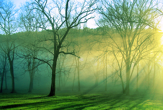 Black barked trees stand alone in the mist of the morning as the sun rises