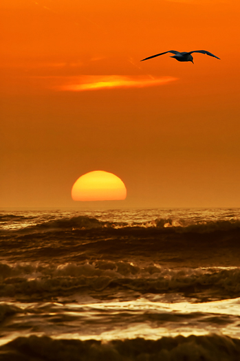 seagulls waves and sunset