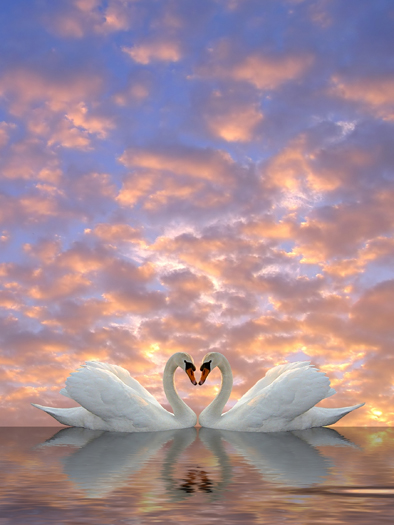 Two swans meeting to form a heart against pink and blue sky