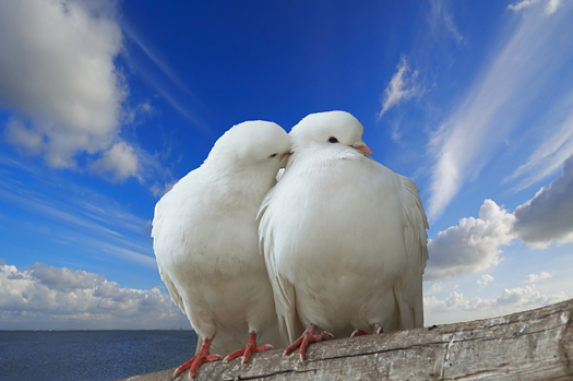 two love birds against blue sky