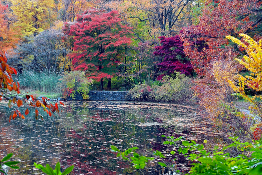 Reflection of colorful Fall foliage in pool