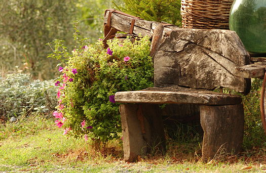 A stone bench and pink shrub, Tuscany, Italy