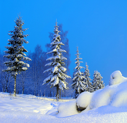 The yeti. Snowy Russian winter forest in Christmas holidays.