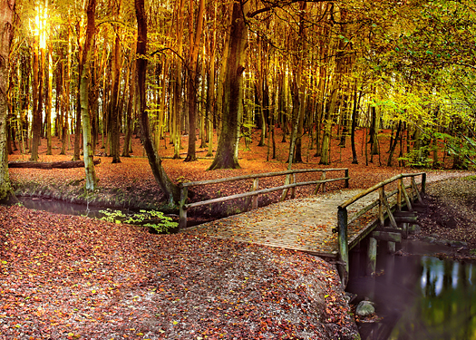 Autumn forest with footbridge