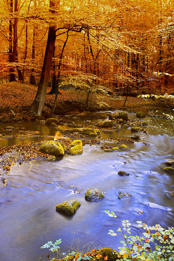 Autumn trees and stream