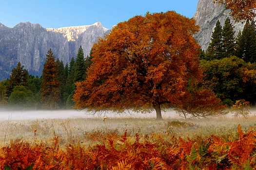 Beautiful Mist in early Autumn morning, Yosemite valley