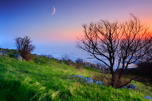 simple nature landscape with a moon background