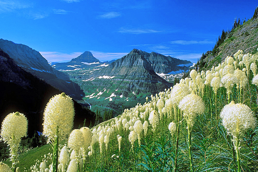 White flowers in a montain