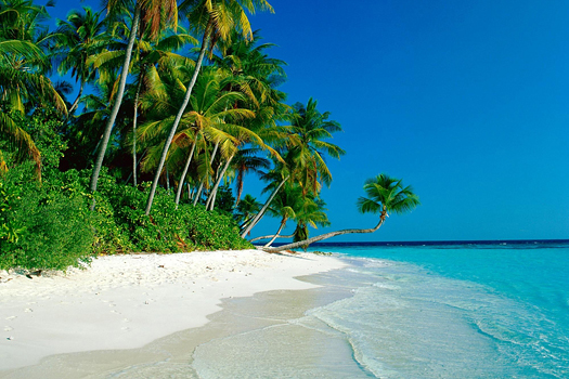 Exotic beach with a palm tree