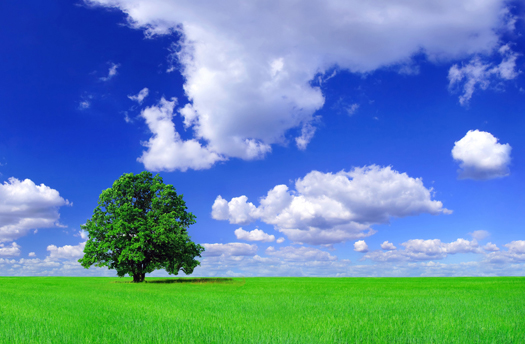 Green field - Summer landscape of single tree on green grass under blue sky and white clouds