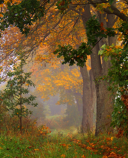 Misty morning in the Autumn forest