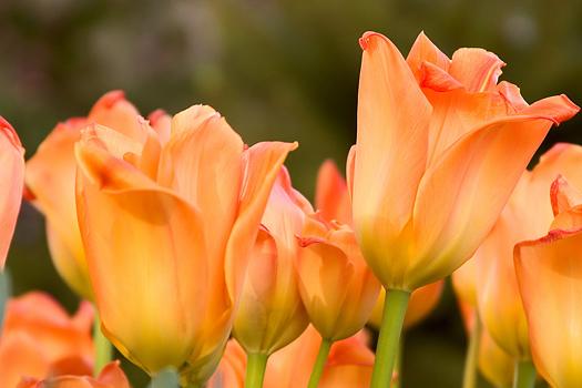 Peach colored tupils