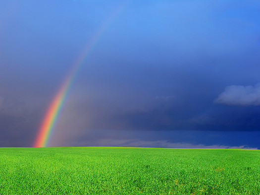 Green field and rainbow - Landscape