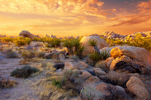 Sunset over the rocks and plants of Joshua Tree National Park, Mojave Desert, California.