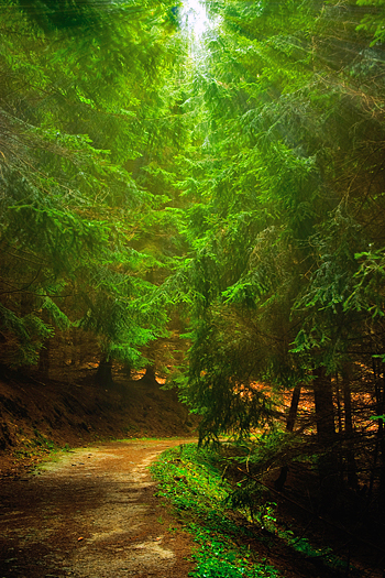 Path in the Forest in Sudety Mountain in Poland with sun rays through the trees