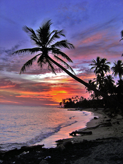A mystical tropical sunset with palm tree and red sky