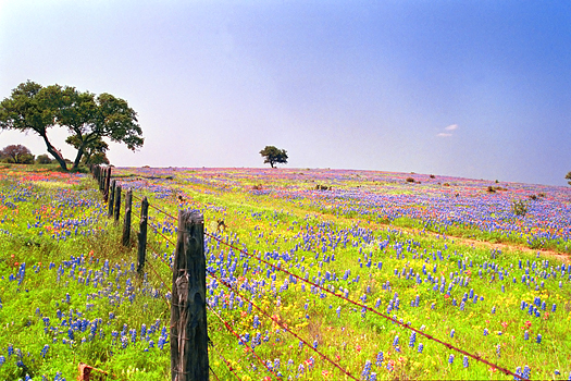 Fence through a field of wildflowers