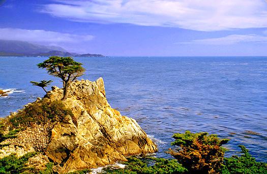 The lone Monterey Pine at Monterey point California