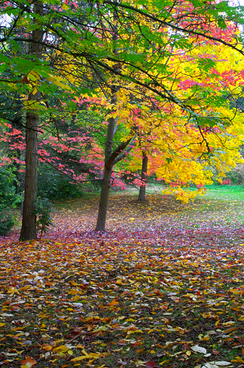 Fall forest with yellow. green and pink trees