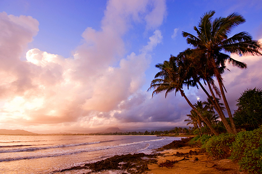 Palm Trees Against the Clouds and Rising Sun on the Beach