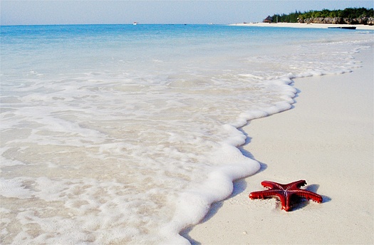 Red sea star on the white sandy seashore of Zanzibar Island