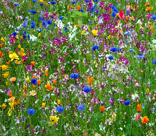 Colorful wildflowers in the meadow.
