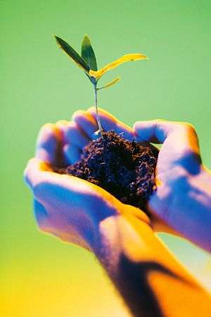 Cupped hands holding a clump of dirt with a seedling in it.