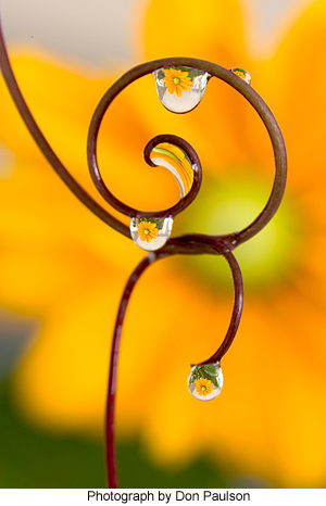 Spiral vines with magnifying water droplets