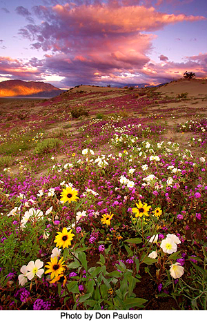 Mountain Meadow by Don Paulson