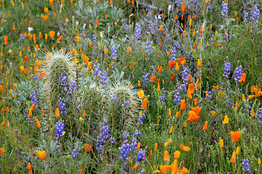 Flower Meadow by Don Paulson