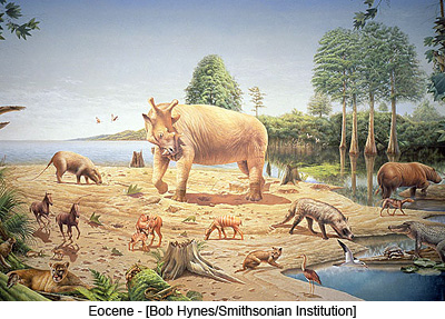 Eocene - [Bob Hynes/Smithsonian Institution]