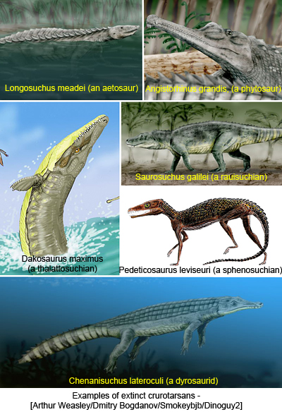 Examples of extinct crurotarsans - [Arthur Weasley/Dmitry Bogdanov/Smokeybjb/Dinoguy2]