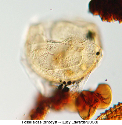 Fossil algae (dinocyst) - [Lucy Edwards/USGS]
