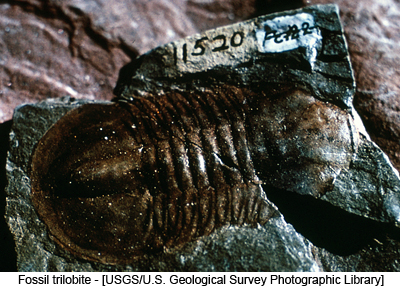 Fossil trilobite - [USGS/U.S. Geological Survey Photographic Library]